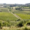 Day Trip from Florence: wine tasting in Chianti
