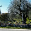Checking Off The Bucket List With I Bike Italy
