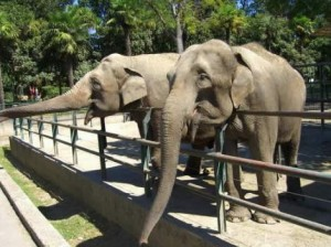 Zoological Gardens of Pistoia