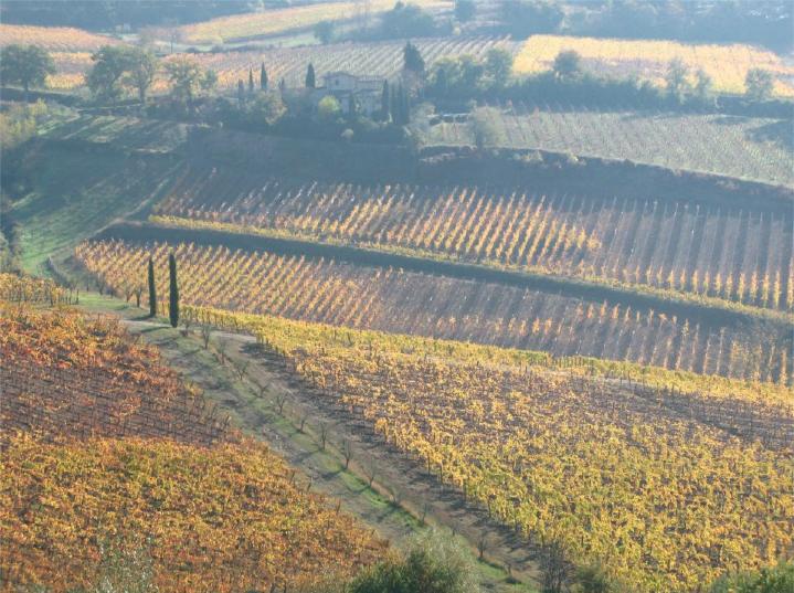 Chianti Vineyard Italy Tuscany