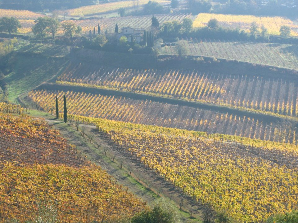 Autumn leaves near Florence Italy