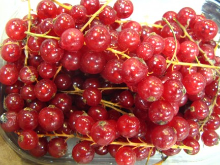 Ribes (current berries) in Florence Italy