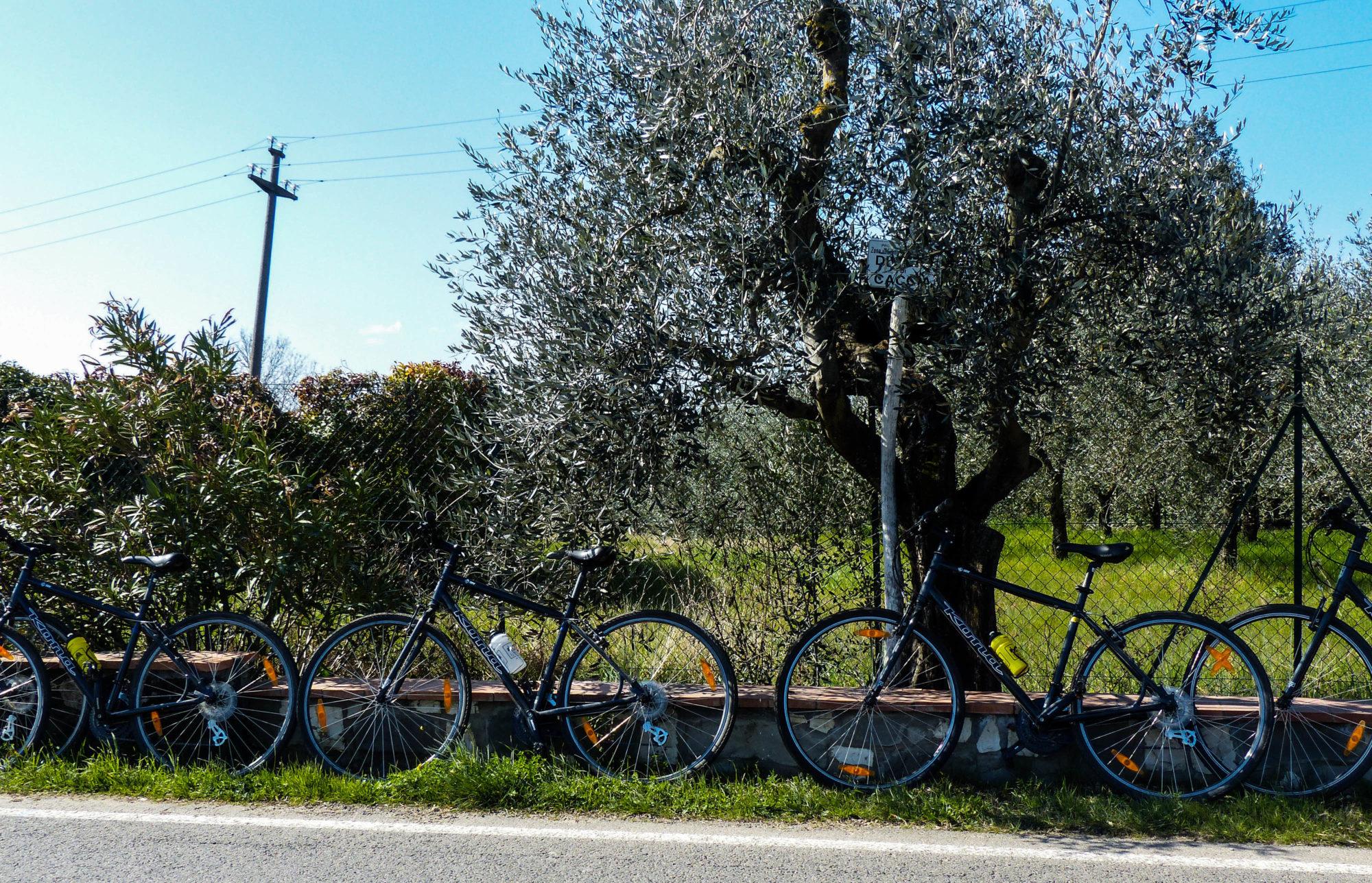 IBIke Italy wine tours