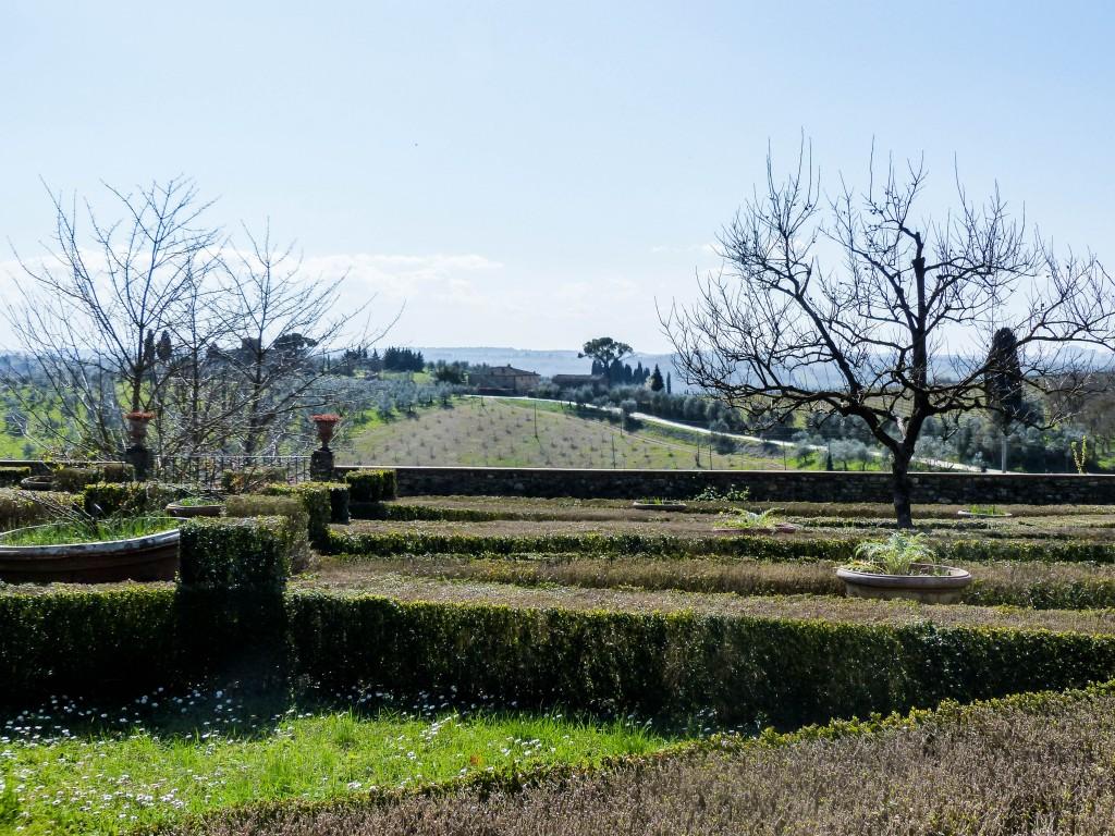 Vineyard in Italy garden