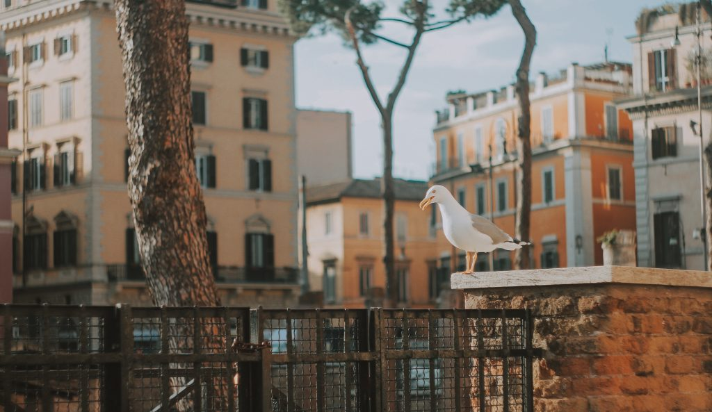 Seagull rome summer Italy