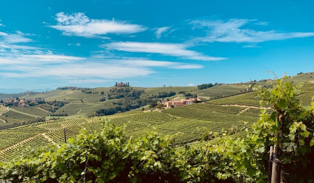 langhe italy wine tour